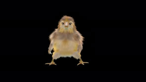 21 Baby Chicks Dancing 4K