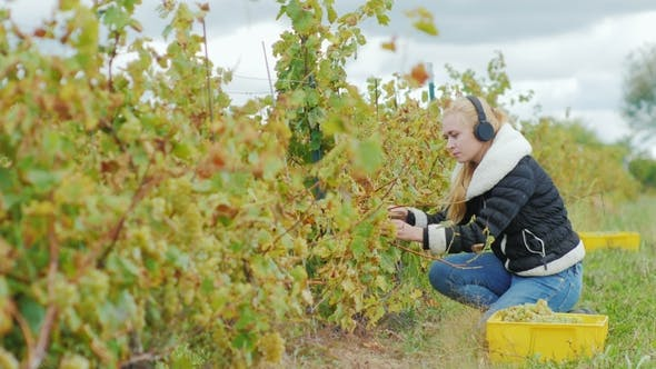 Thumbnail for Young Attractive Woman with Scissors Cuts the Vines, Listening To Music