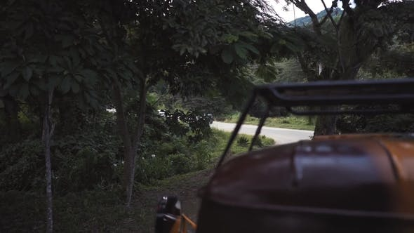 Thumbnail for Car Travel Through the Jungle