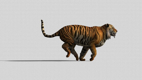 Thumbnail for 4K Tiger Run