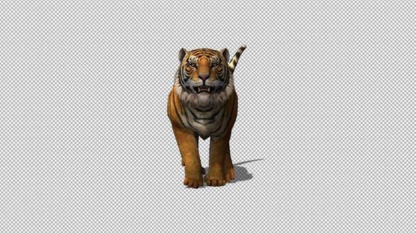Thumbnail for 4K Tiger Running
