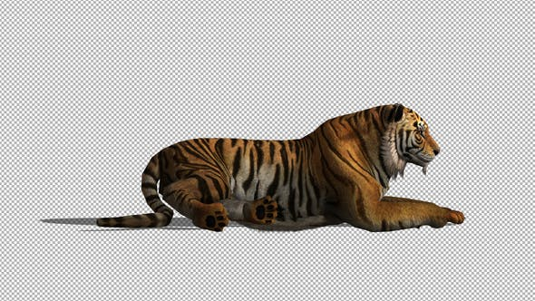 Thumbnail for 4K Tiger Sit Animation
