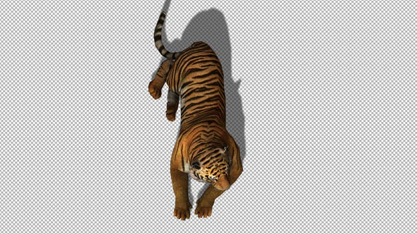 Thumbnail for 4K Tiger Sit Top View