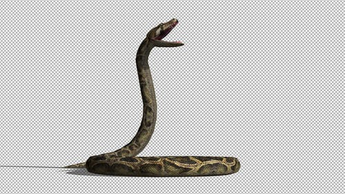 4K Snake
