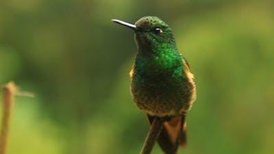 Hummingbird in To Focus