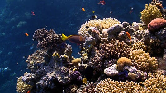 Thumbnail for Colorful Fish On Coral Reef