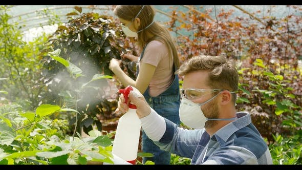 Thumbnail for Gardeners Spraying Plants with Chemical