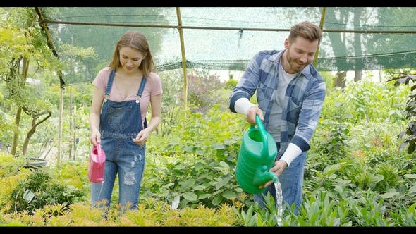 Thumbnail for Cheerful Couple Watering Plants in Hothouse