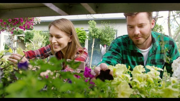 Thumbnail for Cheerful Couple Cultivating Flowers in Garden