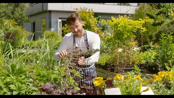 Thumbnail for Man Taking Care of Plants in Garden