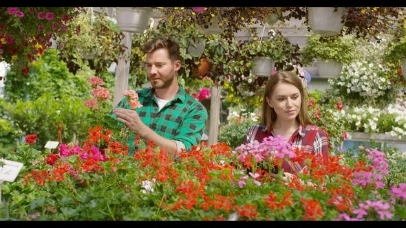 Thumbnail for Man and Woman Gardening Flowers