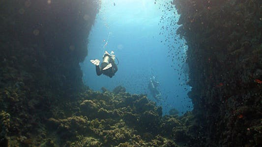 Thumbnail for Diver Swims Among Coral Reefs