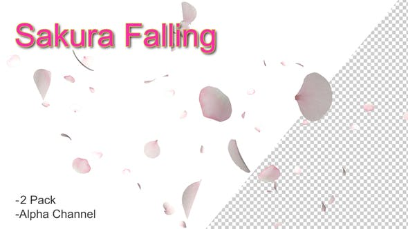 Cover Image for Sakura Falling