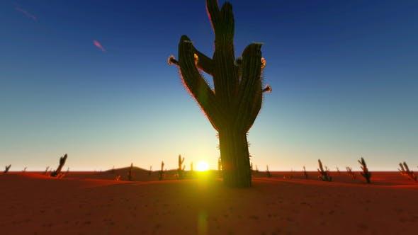 Thumbnail for Sunset In The Desert