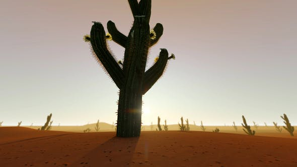 Thumbnail for Desert Sunset With Cactus Silhouette