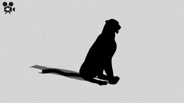 Thumbnail for 4K Cheetah Sitting Silhouette