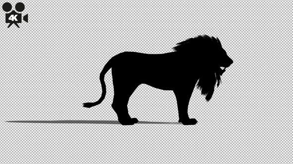 Thumbnail for 4K Lion Idle Silhouette