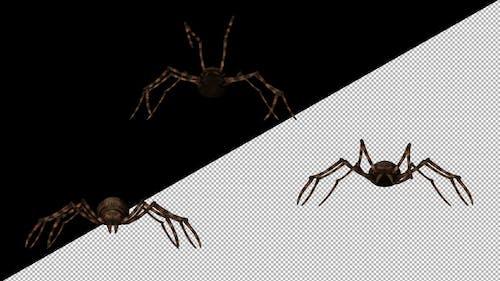 Spinne essen