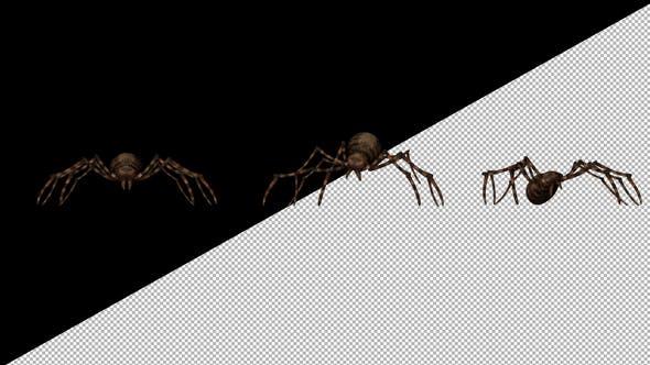Spider Netting