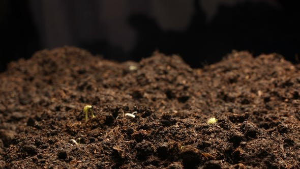 Cover Image for Growing Plant Agriculture