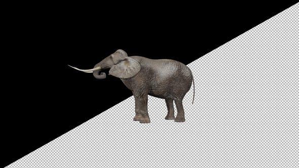 Elephant Eats