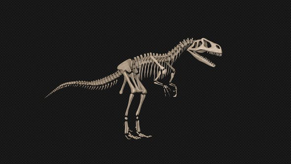 Thumbnail for Dinosaur Skeleton