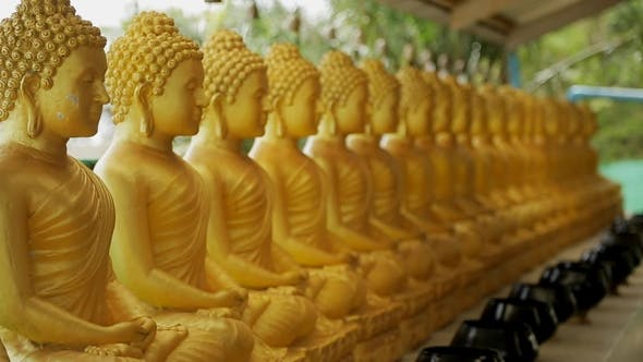 Thumbnail for Golden Buddha Statues Stand in Row on Summer Terrace Against Background of Rustling Green Trees in