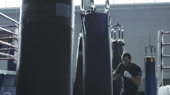 Thumbnail for Boxer Training with Bag in Gym