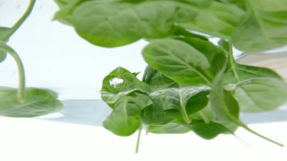 Thumbnail for Spinach Leaves Are Boiled