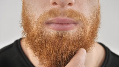 A Man with a Red Beard, Scratching His Beard