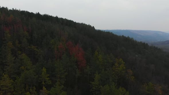 Thumbnail for Aerial View From Drone of Forest with Green Trees. Shot Over the North European Wood. Cinematic