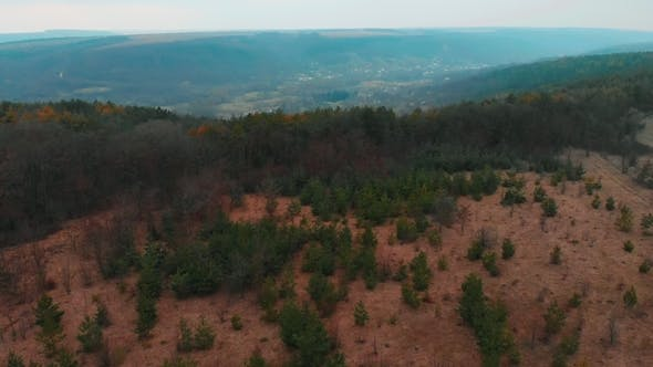 Thumbnail for Aerial View From Drone of Forest with Green Trees. Shot Over the North European Wood. Small