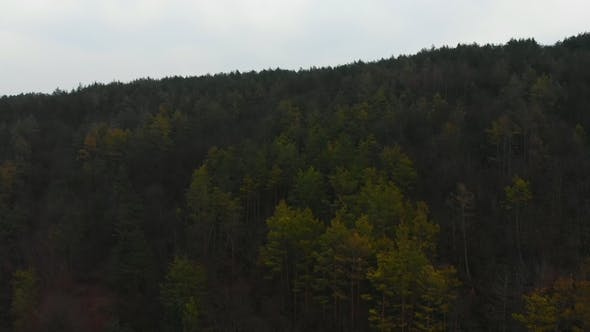 Thumbnail for Aerial View From Drone of Forest with Green Trees. Shot Over the North European Wood