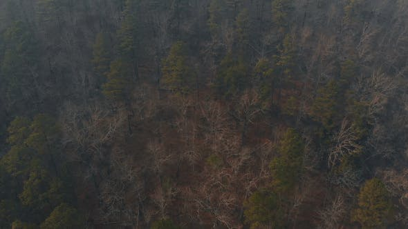 Thumbnail for Smoke Over Forest from Controlled Burn