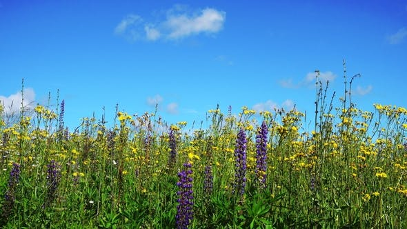 Thumbnail for Beautiful Landscape with Flowers and Blue Sky