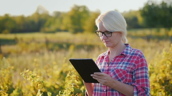 Thumbnail for The Farmer Uses a Tablet in the Field. At Sunset