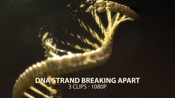 Thumbnail for DNA Strand Breaking Apart