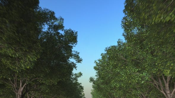 Thumbnail for Travelling Along Forest Road
