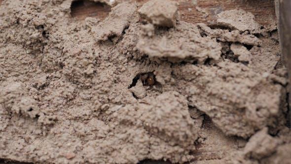 Thumbnail for Termites