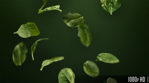 Handful of Healthy Green Spinach Leaves Tumbling Down Looping Background