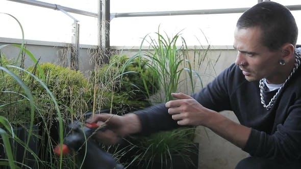 Thumbnail for Brutal Gardener with Piercing Sprinkles Abundant Plants on Veranda