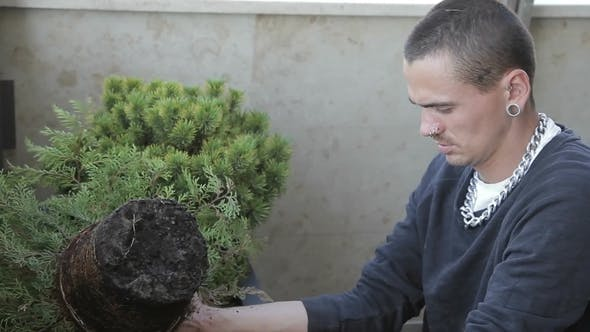 Thumbnail for Young Man Pulls Green Plant from Pot and Puts in Box in Greenhouse