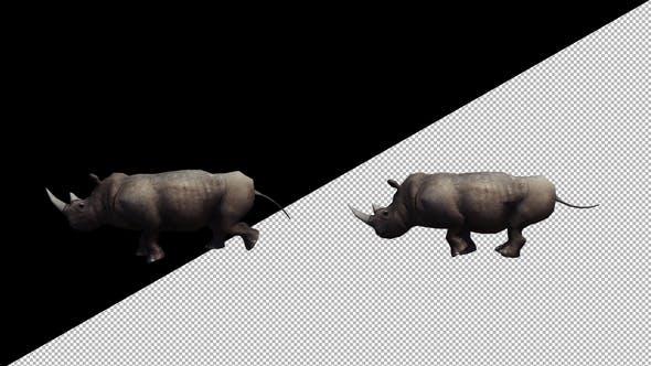 Thumbnail for Rhino Running