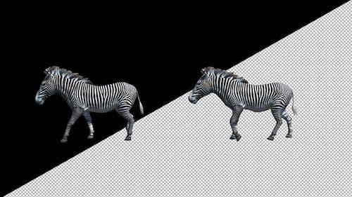 Zebra Walk Animation