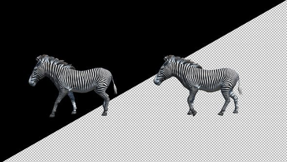 Zebra Walk Animation