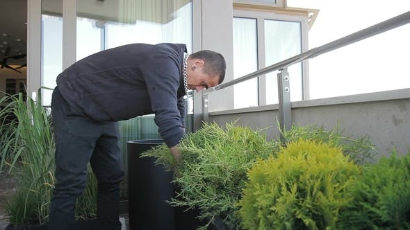 Thumbnail for Man Takes Care of Green Plants in Pots on Balcony