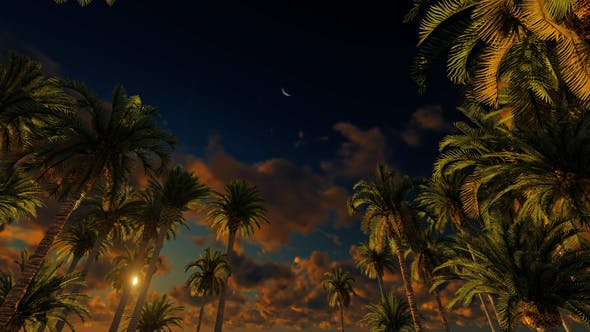 Thumbnail for Palms At Sunset