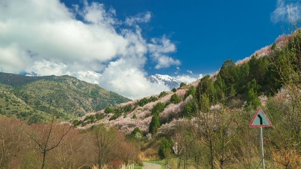Thumbnail for Flowering Wild Fruit Trees in the Mountains Spring