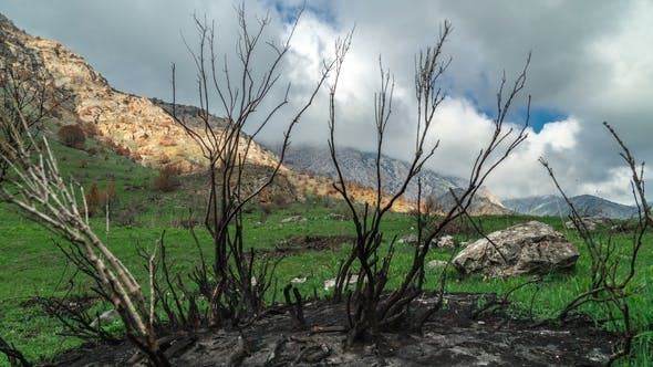 Cover Image for Burnt Trees after a Fire in the Spring Mountains in California