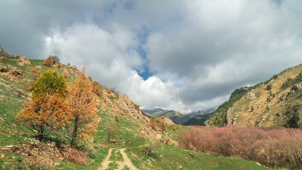Cover Image for Landscape in the Alps with Green Meadows and Blooming Orange Trees and Mountain